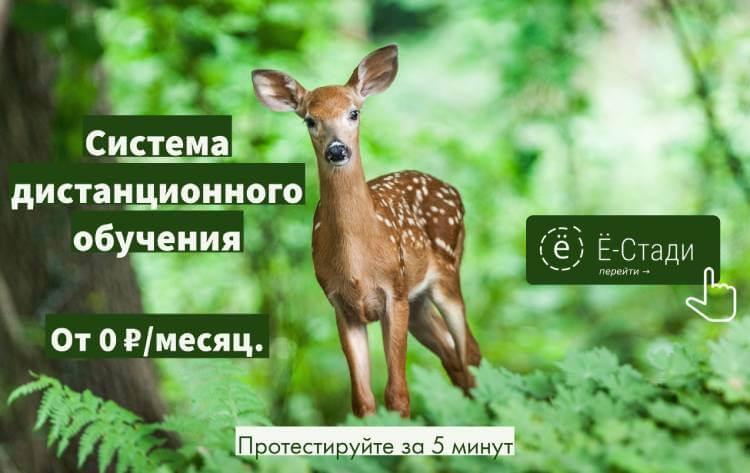 LMS your-study.ru
